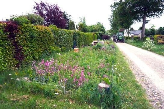Bild mit Wildblumen in Lammersdorf