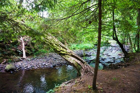 Bild Vichtbach Sternrouten Wanderung Mulartshütte-Roetgen